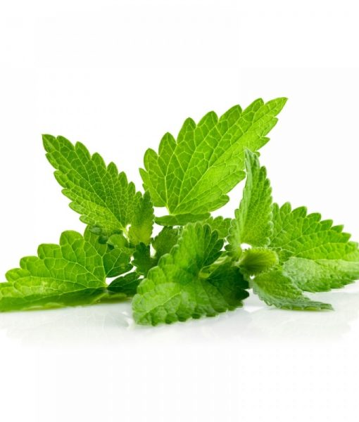 spearmint-leaf